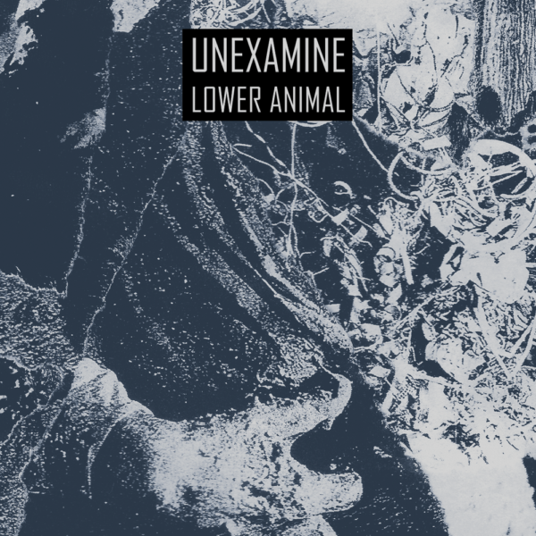UNEXAMINE – Lower Animal CS